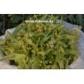 Липовый цвет, кипрей, зверобой, сухие травы, есть в наличии.