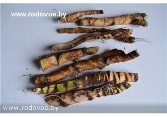 Аир  болотный, цельный сухой корень, дикорастущие растения Беларуси, купить,  www.rodovoe.by