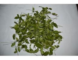 Барвинок , купить , лист, стебель, дикорастущие растение Беларуси в сухом виде.