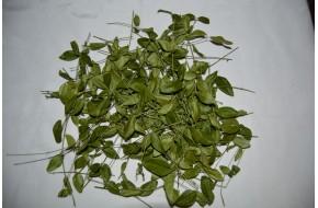Барвинка трава, лист, боярышник, астрагал, лабазник.