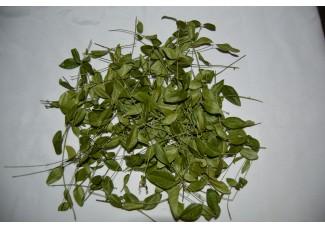 Барвинок ,  купить , лист, стебель,  растение (травы) Беларуси в сухом виде ( бесплатная доставка).