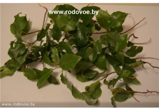 Боровая матка , ортилия однобокая, купить , лист, стебель, дикорастущие  растение Беларуси в сухом виде,