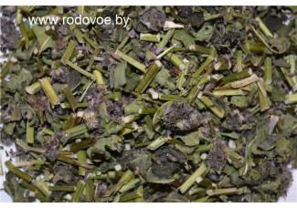 Буквица лекарственная (шалфей полевой), высушенная  трава, в наличии, бесплатная доставка.