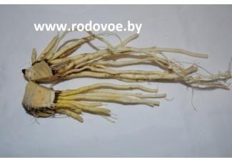 Чемерица Лобеля, чемеричны корень, высушенный в цельном виде.