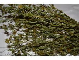 Растения(травы)  : орех грецкий,  лабазник, осина, череда, репешок, кипрей, чистотел,  дикорастущие растения   Беларуси, купить.
