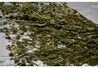 Растения(травы): хвощ , череда ,  вереск ,  кипрей ,  грушанка ,  золотарник ,  смородина , спорыш,  дикорастущие растения   Беларуси, купить.