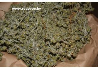 Сушеница топяная, болотная, лист, стебель, корень.
