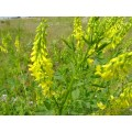 Донник желтый, лекарственный, лист, цвет, высушенная трава, купить, бесплатная доставка.