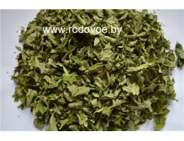 Лещина обыкновенная  орешник,  лист, молодые побеги, дикорастущие растение  Беларуси, купить.