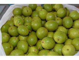 Грецкие  зеленые  орехи молочной спелости, не зрелые (1 кг. ), купить, Беларусь , для настойки, ликера, настойка. Продукция с Родового поместья. Бесплатная  экспресс доставка.