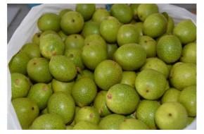 Грецкие зеленые орехи молочной спелости, купить, 1 кг./10 руб.