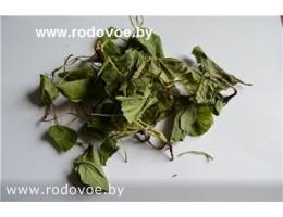 Грушанка круглолистная , лист, стебель, растение (травы) в сухом виде, купить , Беларусь ( бесплатная доставка).