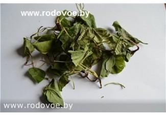 Грушанка круглолистная , лист, стебель,   дикорастущие  растение в сухом виде, купить , Беларусь