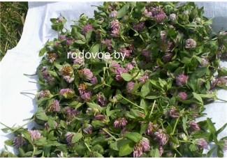 Клевер луговой ,красный,  лист, стебель, цветущие верхушки,  дикорастущие растение   Беларуси, купить.