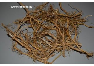 Крапива, корни, высушенные корни, купить, бесплатная доставка.