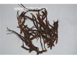 Белая лапчатка ,  4-ех летняя , купить, цельные корни 3-5 см. ,цельный сухой корень, Беларусь, в Беларуси ( бесплатная доставка).
