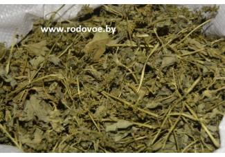 Манжетка обыкновенная, лист, цветы, стебель, трава манжетки.
