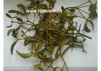 Омела белая ,  березовая,с березы , лист, стебель, верхушки, дикорастущие растение   Беларуси  в сухом виде,  купить.