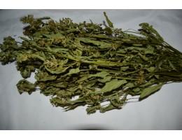 Пикульник,   лист, стебель, цветущие верхушки, дикорастущие растение   Беларуси в сухом виде, купить ( бесплатная доставка).
