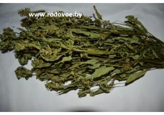 Пикульник,   лист, стебель, цветущие верхушки, дикорастущие растение   Беларуси в сухом виде, купить.