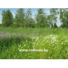 Травы и растения Беларуси (от А до Я).