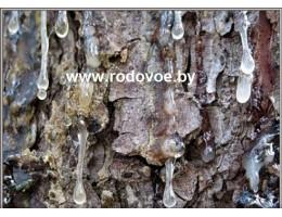 Живица сосновая,  смола с дерева,  купить, продать, Беларусь ( бесплатная доставка).