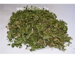 Осина ,лист,  молодые побеги ,  дикорастущие растение   Беларуси, купить.
