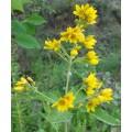 Вербейник обыкновенный, лист, стебель, верхушки, высушенная трава, купить, бесплатная доставка.