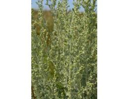 Полынь горькая , лист, стебель, цветущие верхушки, дикорастущие растение   Беларуси в сухом виде, купить ( бесплатная доставка).