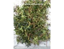 Растения (травы) : полынь, василек шероховатый, спорыш, золотарник канадский, зверобой,   дикорастущие растения   Беларуси, купить.