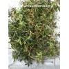 Зимолюбка зонтичная, лист, стебель, корень, высушенная трава, купить, бесплатная доставка.