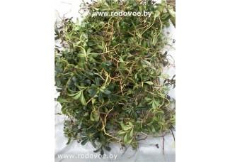 Зимолюбка зонтичная, лист, стебель, корень, высушенная трава, в наличии, бесплатная доставка.