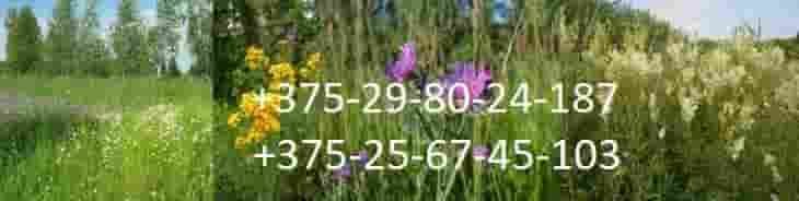 Интернет - магазин  по продаже дикорастущих растений  и трав.